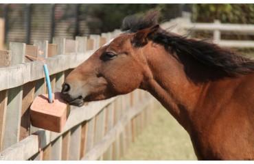Mineralien für Pferde - Vitalstoffe für den Stoffwechsel