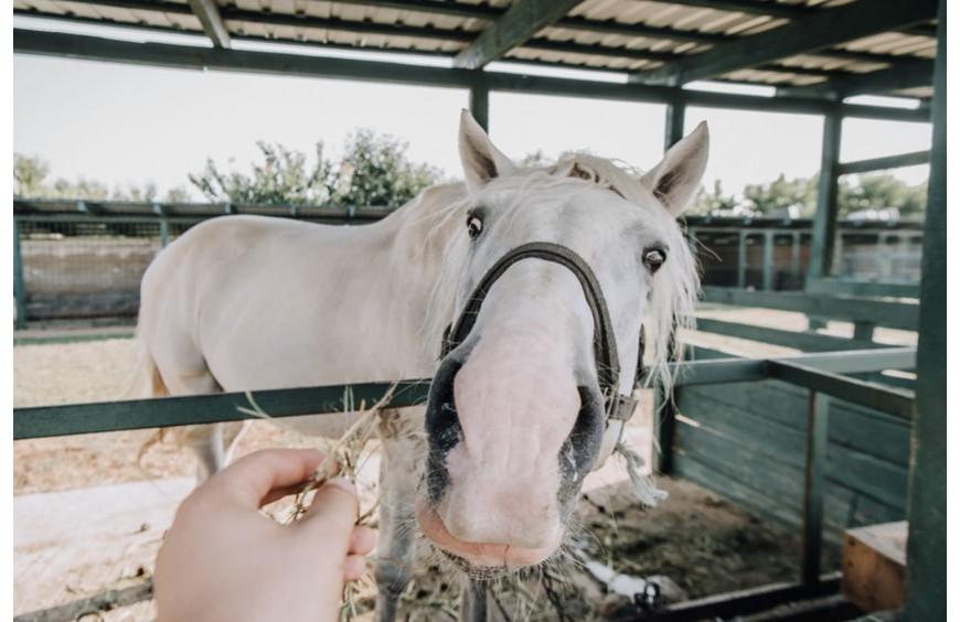 Gesunde Verdauung für dein Pferd