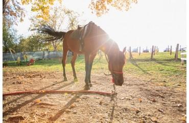 Gesunde Leckerli - das beste Geschenk für Pferdeliebhaber