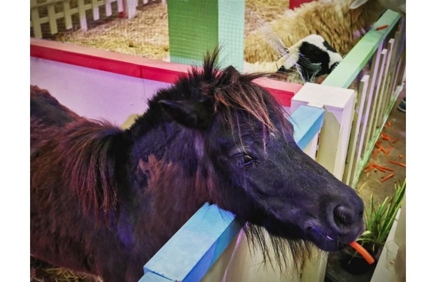 Maridil Oil für ein gesundes Pferdeleben