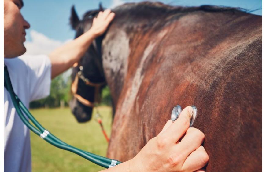 Gallen - Pferdegesundheit: manchmal mehr als nur kleine Schönheitsfehler