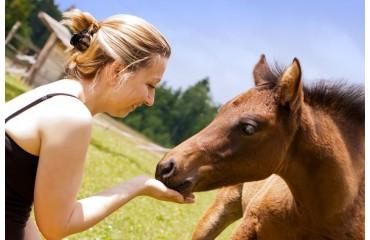 Esparsette-Leckerlis überzeugen durch ihre natürliche Herstellung für eine gesunde Ernährung - so muss Pferdefutter sein!