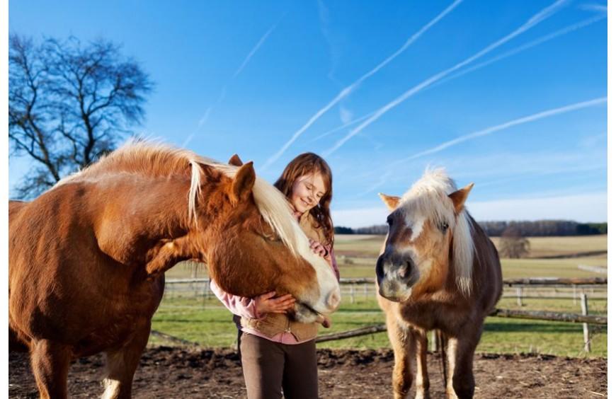 Gute Beziehung zum Pferd durch Leckerli und gesundes Futter