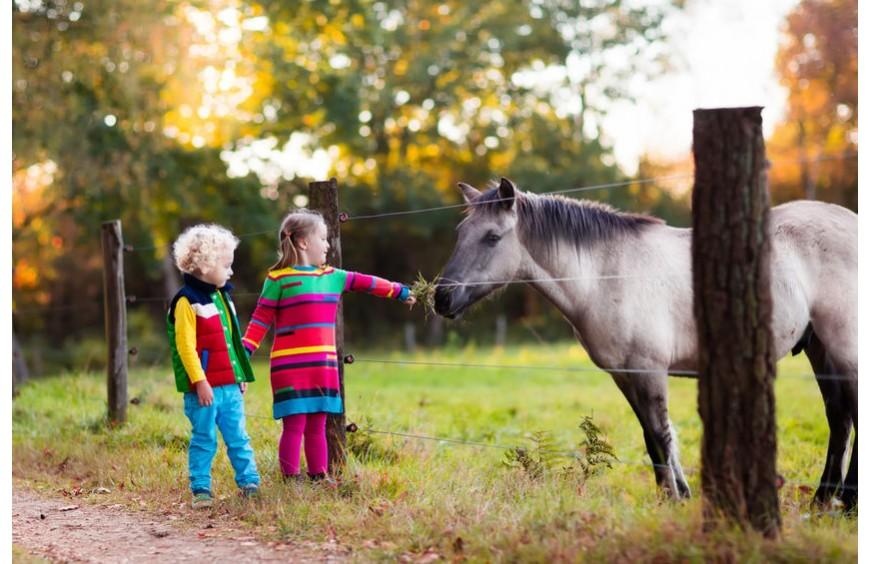 Was abwechslungsreiche Fütterung für Dein Pferd bedeutet