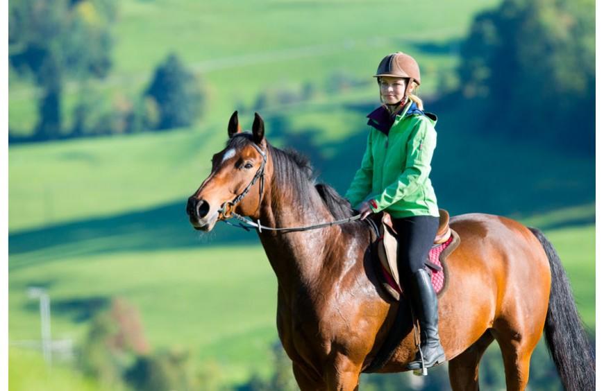 Den Pferderücken staerken: ein wichtiges Ausbildungsziel im Reitsport