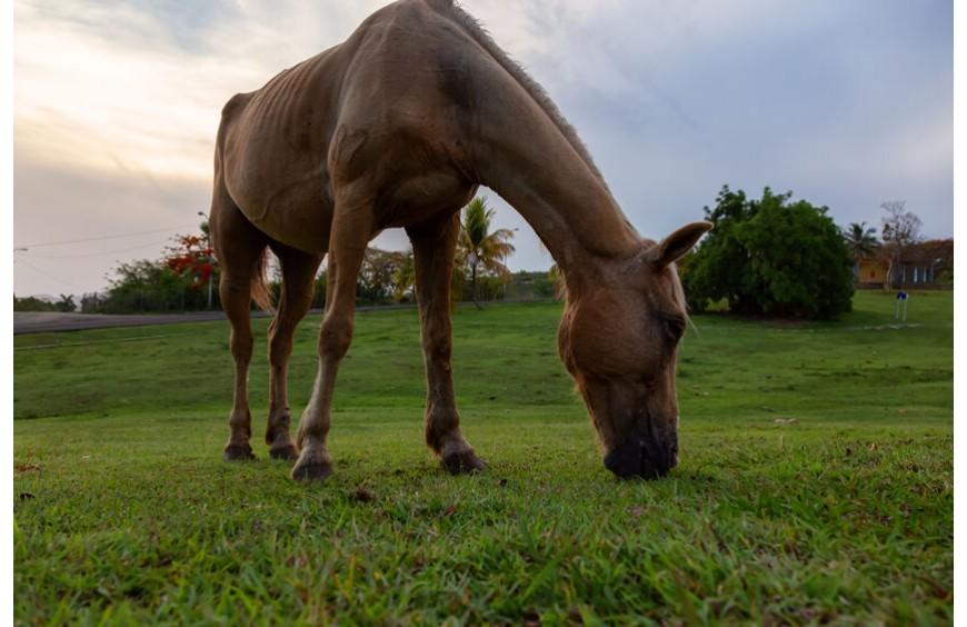 Pferde-Grundversorgung mit Esparsette - natürliche Ernährung Deines Pferdes mit Premium-Produkten aus dem Maridil-Shop