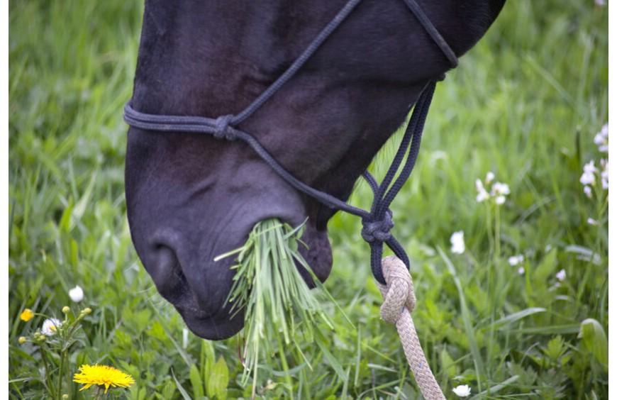 Verdauung beim Pferd anregen - schonend mit der richtigen Futterbeigabe